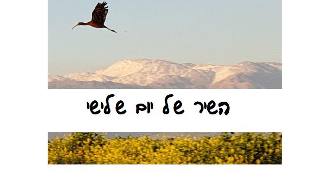 עמוס נוי, קינמון